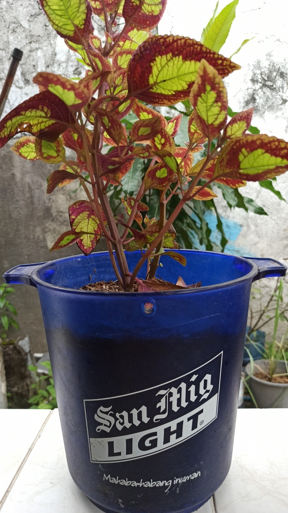 Container Gardening - Beer Bucket