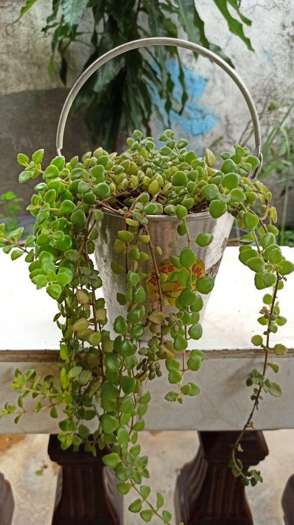 Container Gardening - Ice Bucket