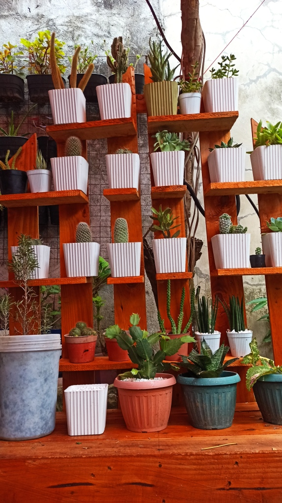 Cactus and Succulents Collections